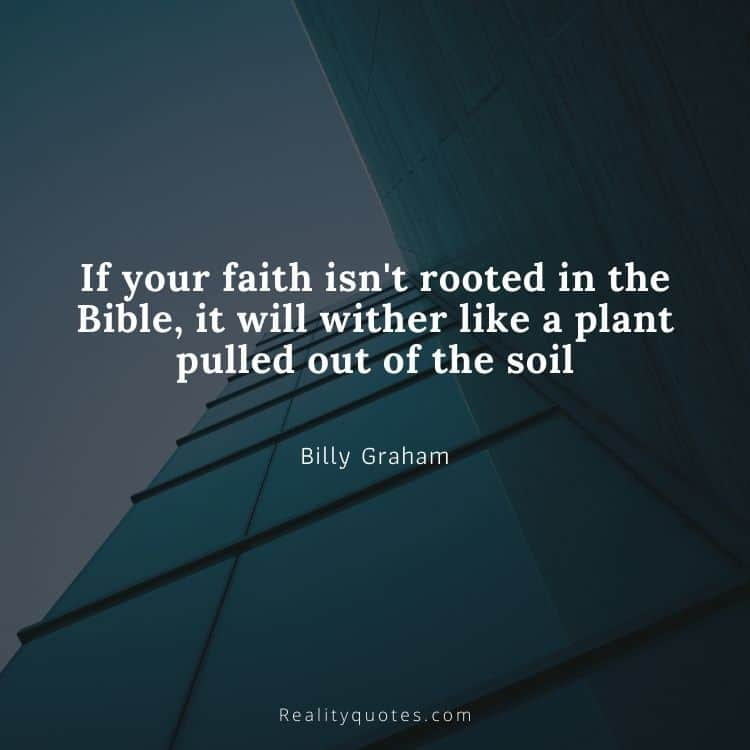 If your faith isn't rooted in the Bible, it will wither like a plant pulled out of the soil